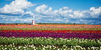 Wooden Shoe Tulip Farm Woodburn, Oregon